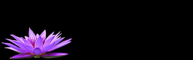 giglio di acqua nuphar lutea pianta acquatica fiore stagno natura fioritura laghetto da giardino lago rosengewächs impianto giardino blu viola giglio d'acqua blu giglio viola teichrose blu teichrose viola estate fiore blu fiore viola nymphaea sfondo immagine di sfondo greeting card mappa acqua flora meditazione sfondo sfondo acqua meditazione meditazione meditazione meditazione meditazione